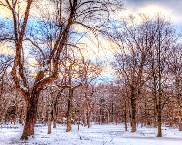 snow, hdr, trees, virginia, landscape, canon, angela b. pan photography