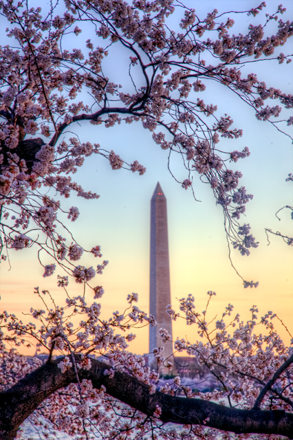 washington monument, cherry blossoms, tidal basin, sunrise, dc, washington dc, angela b. pan, abpan