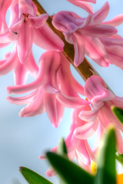 pink flowers, nature photo, macro, close up, angela b. pan, abpan, flowers