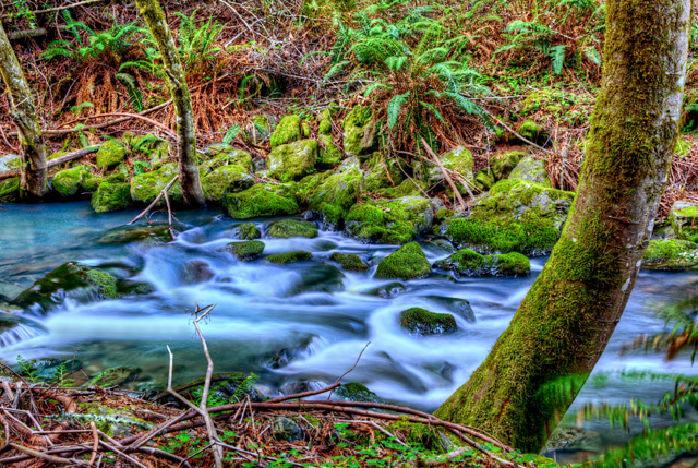 redwood creek, muir woods, hdr, moss, abpan, california, angela b. pan photography