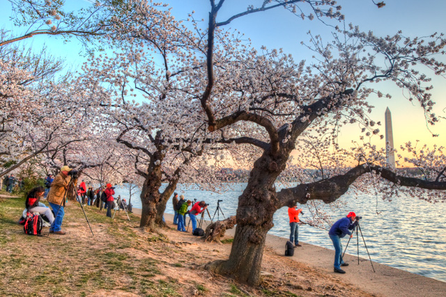 DC, cherry blossoms, photographers, washington dc, HDR, sunrise, abpan, angela b. pan