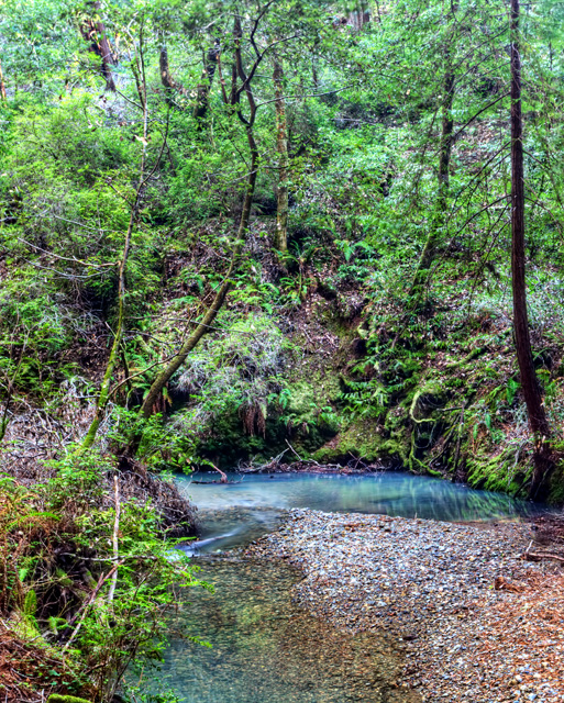muir woods, redwood creek, abpan, angela b. pan, california, john muir, landscape, hdr,