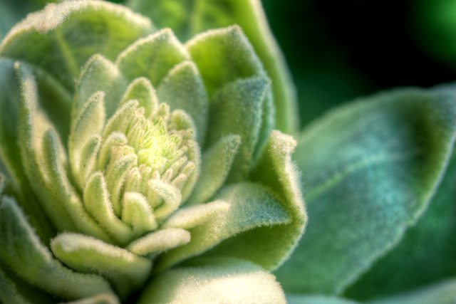 green, flower, abpan, angela b. pan, macro, botanical, hdr