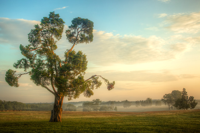 tree, manassas, virginia, travel, landscape, fog, sunrise, battlefield, angela b. pan, abpan, hdr, tree