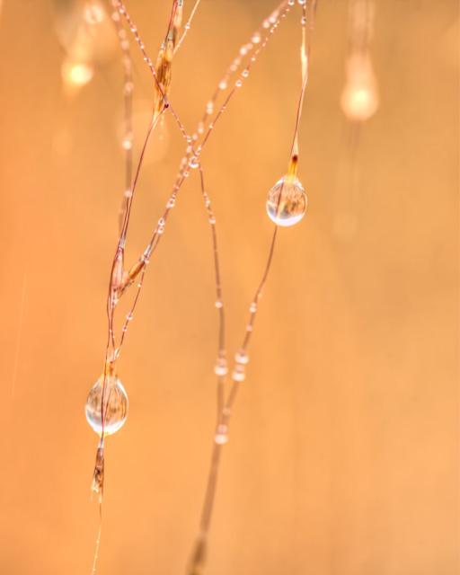 droplet, water, macro, closeup, botanical gardens, angela b. pan, abpan, hdr, virgnia