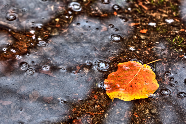 leaf, meadowlark, botanical garden, parking lot, angela b. pan, abpan, hdr, macro, autumn, bubbles,