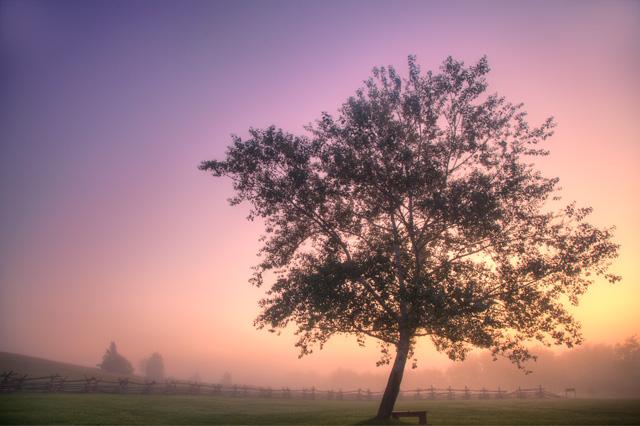 manassas, virginia, fog, landscape, hdr, sunrise, tree, angela b. pan, abpan, photo, photography