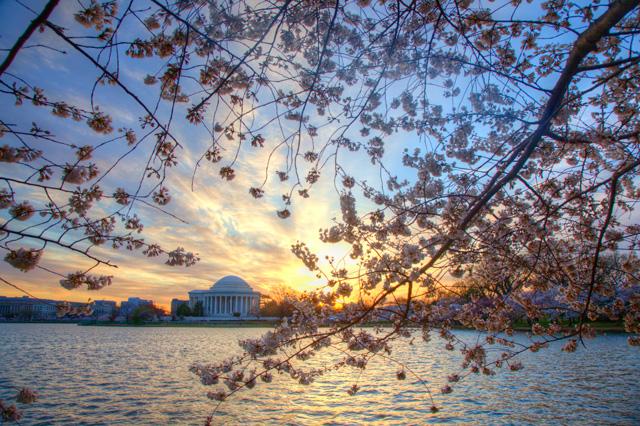 cherry blossoms, jefferson, memorial, sunrise, landscape, tidal basin, washington dc, hdr, photography, photo, travel