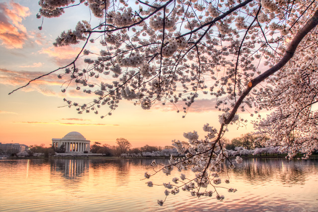 Photo of the Jefferson Memorial and the Cherry Blossoms along the Tidal Basin in 2012 - Angela B. Pan Photography