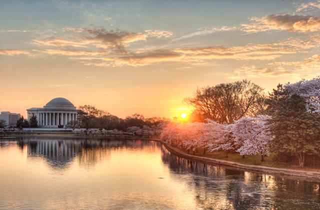 jefferson memorial, cherry blossoms, tree, abpan, angela b. pan, hdr, travel, sunrise, landscape,