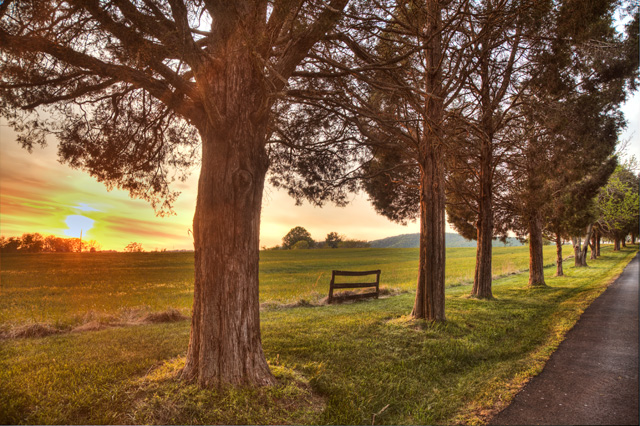 charlottesville, trees, sunset, abpan, angela b. pan, travel, hdr, landscape, virginia, winery, fence, photography, photo, scenic,