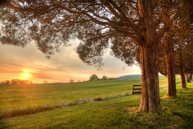 charlottesville, winery, virginia va, hdr, photography, photo, landscape, sunset, angela b. pan, abpan, trees, scenic, travel