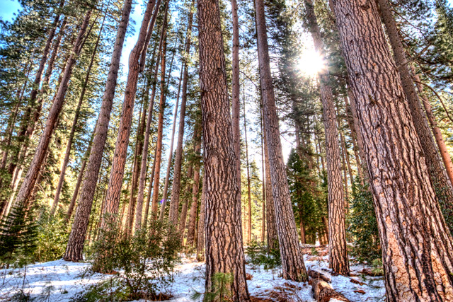 trees, sunburst, snow, yosemite, california, travel, hdr, landscape, angela b. pan, abpan, photography, photo