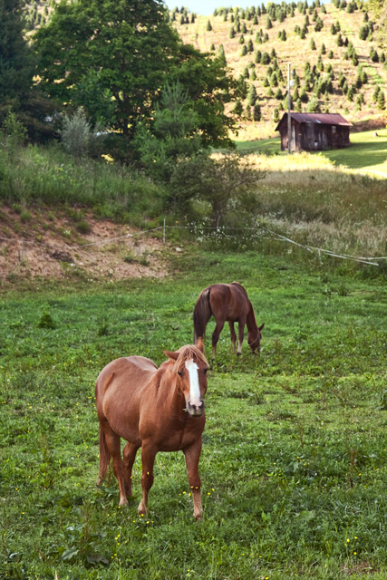 grayson highlands, state park, virginia, horses, hdr, photography, travel, photo, angela b. pan, abpan