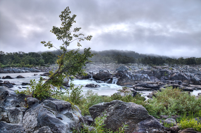 great falls, park, virginia, va, hdr, photography, photo, landscape, sunrise, fog, tree, screne,