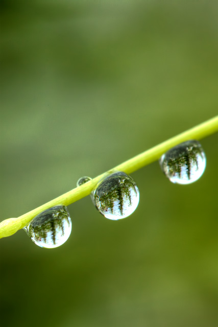 droplets, trees, macro, hdr, va, angela b. pan, abpan, photography, photo