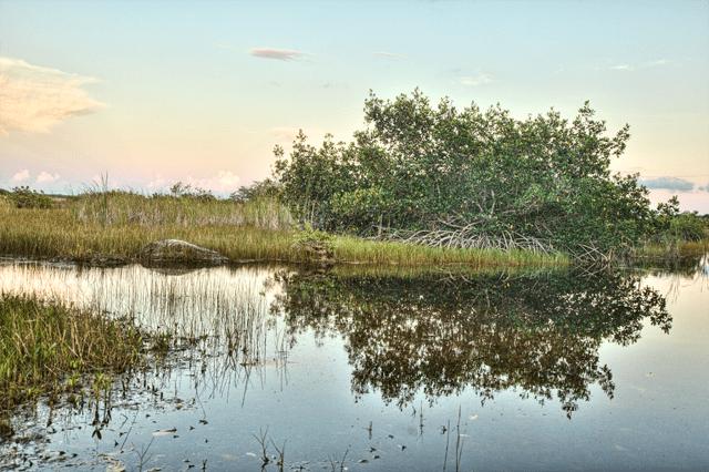 sunset, everglades, fl, angela b. pan, abpan, landscape, hdr, florida, mangrove tree