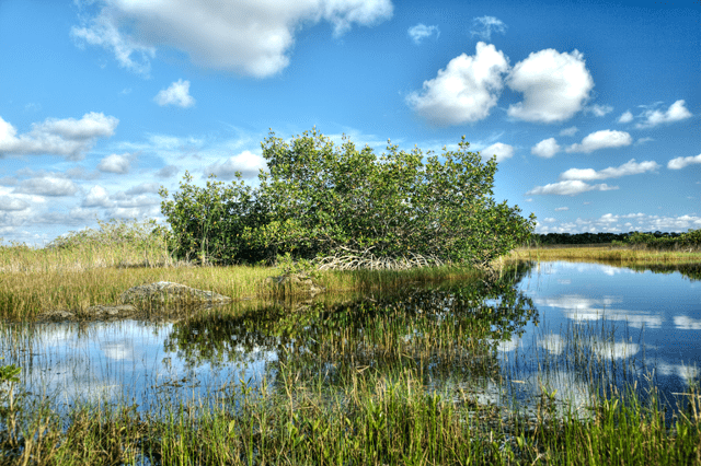everglades, florida, tree, angela b. pan, abpan, hdr, landscape photo, photography, fl,