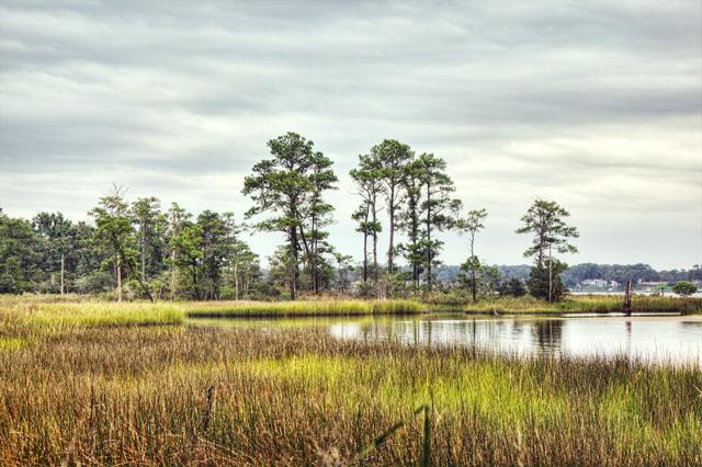 marsh, first landing, state park, virginia, va, hdr, landscape, photo, photography, angela b. pan, abpan,