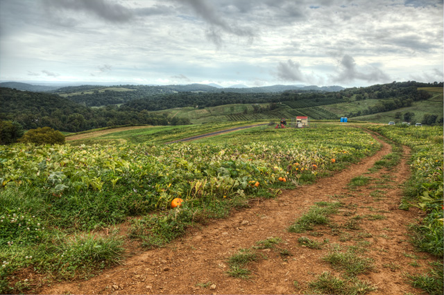 pumpkin patch, blue ridge mountains, apple picking, hdr, landscape, photography, photo, angela b. pan, abpan