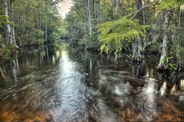 everglades, trees, swamp, angela b. pan, abpan, hdr, photography, photo, landscape, florida