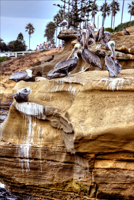pelicans, childrens beach, angela b. pan, abpan, travel, hdr, photo, photography,