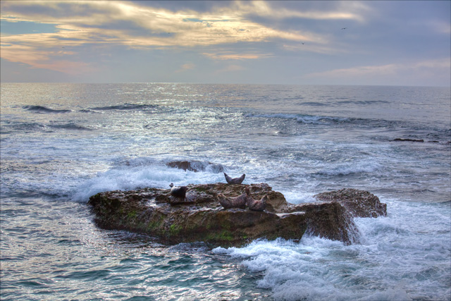 seals, hdr, travel, sunset, photo, photography, childrens beach, san diego, california, cali, ca