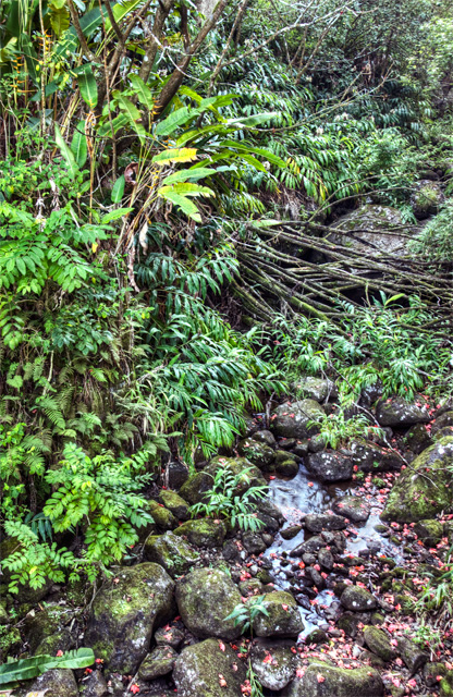 drive to hana, maui, trees, stream, hdr, landscape, photo, photography, angela b. pan, abpan, hawaii