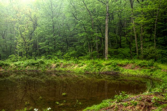 lake, forrest, angela b. pan, abpan, blue ridge mountains, virginia, va, Charlottesville, hdr, travel, photo, photography