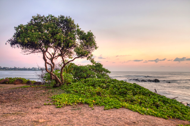 lydgate beach, park, kauai, hawaii, sunrise, tree, angela b. pan, abpan, photo, photography, landscape, hdr, travel