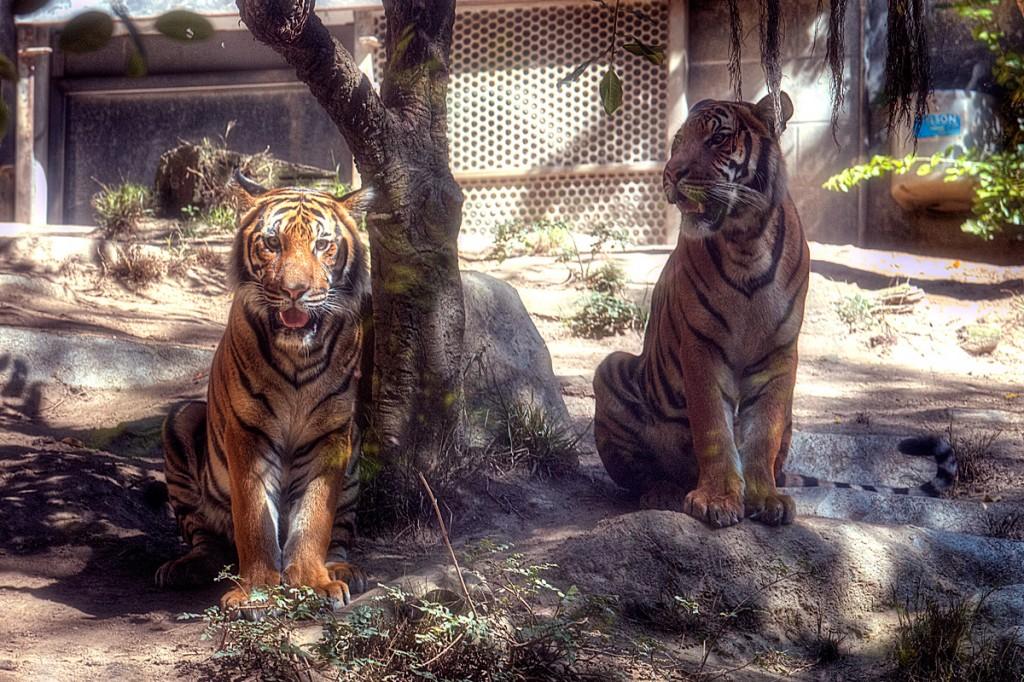 san diego, zoo, california