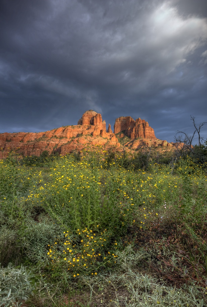 cathedral-rock-wildflower