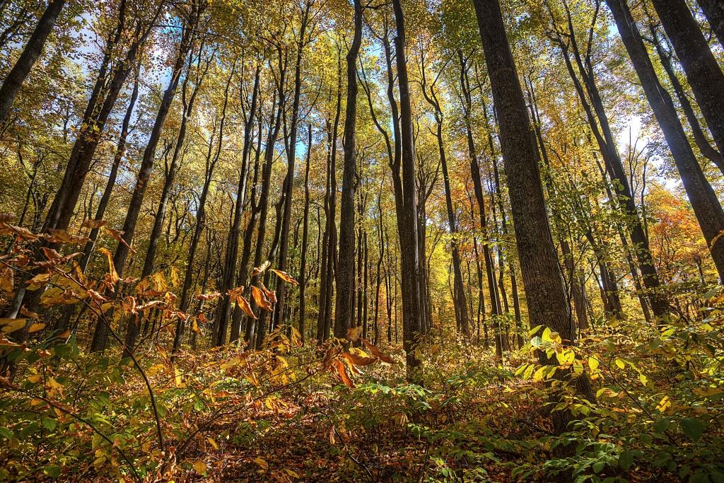 trees, shenandoah, virginia, va, mountains, sun, leaves, autumn, travel
