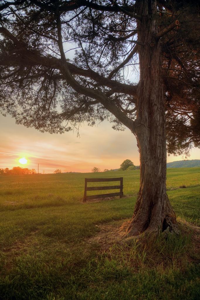 charlottesville, virginia, va, landscape, sunset, trees, travel, united states, usa, america