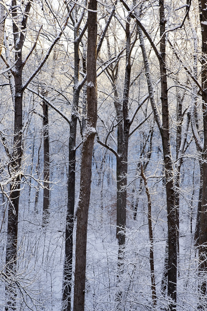 snow, trees, virginia, hercules, winter, va, trunks,