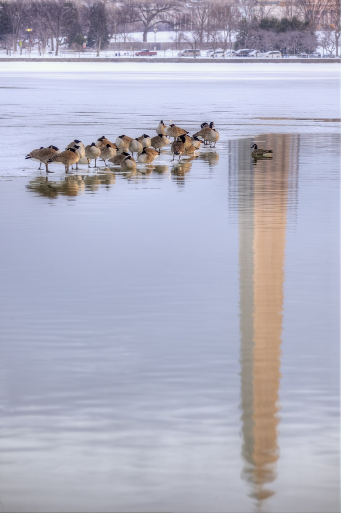 geese, canadian, washington dc, travel, tidal basin, frozen, ice, snow, washington monument, water, reflection, travel,