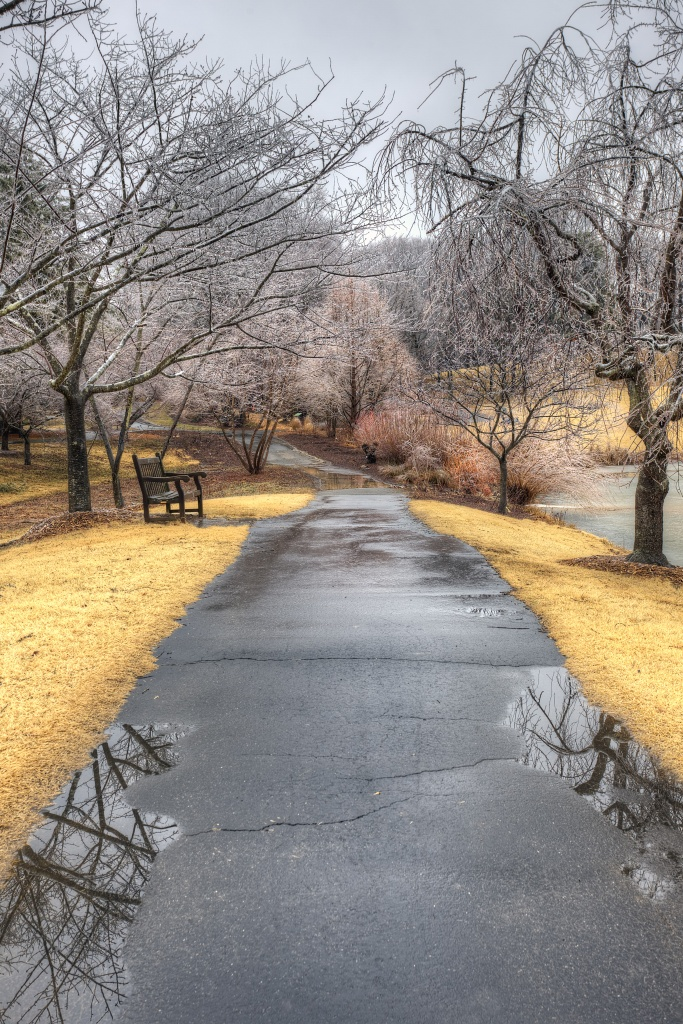 meadowlark botanical garden, puddles, reflection, trees, ice, dead grass, path, trail, virginia, travel, va, winter