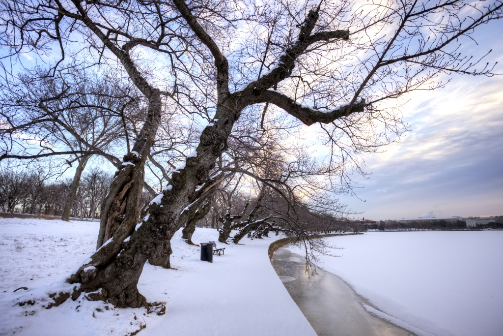 tidal basin, washington dc, snow, frozen, water, tree, path, travel, landscape, winter, washington dc, dc