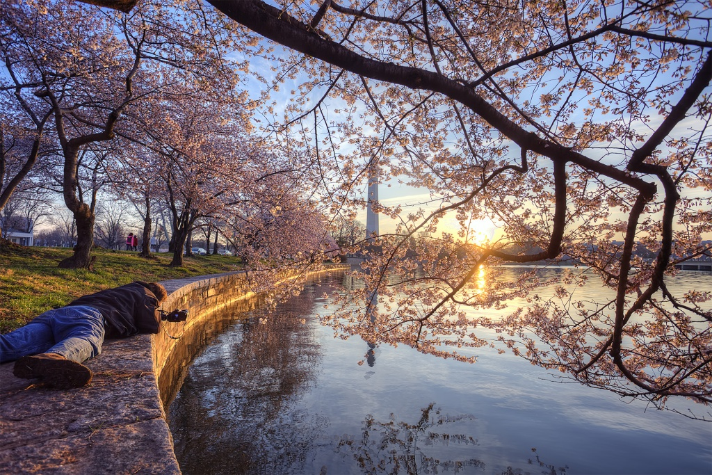 photographer, buddy, tidal basin, kutz bridge, monument, sunrise, cherry blossoms, washington dc