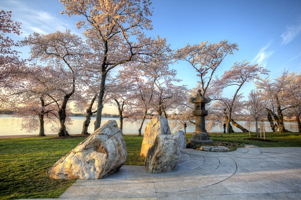 cherry blossoms, pagoda, japanese, japan, flowers, spring, washington dc, rocks, landscape, landscaping, travel, sunrise, tidal basin, festival