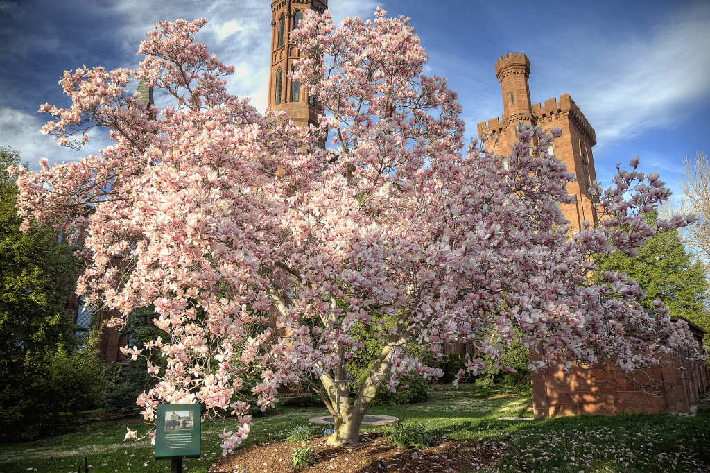 smithsonian castle, magnolia tree, spring, washington dc, clouds, weather, travel, smithsonian