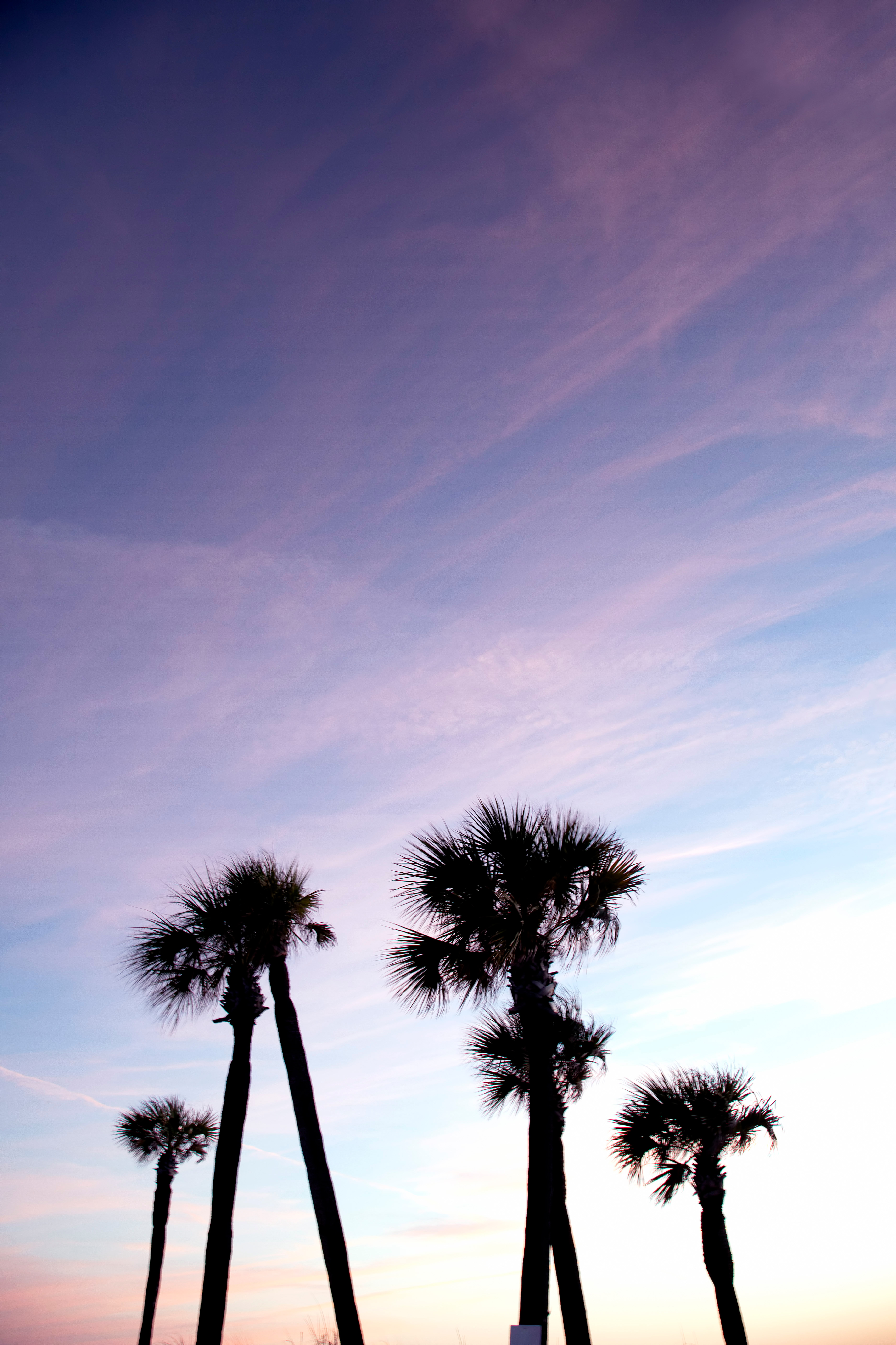 Palm Trees Sunset Clearwater Beach Clouds Florida Fl