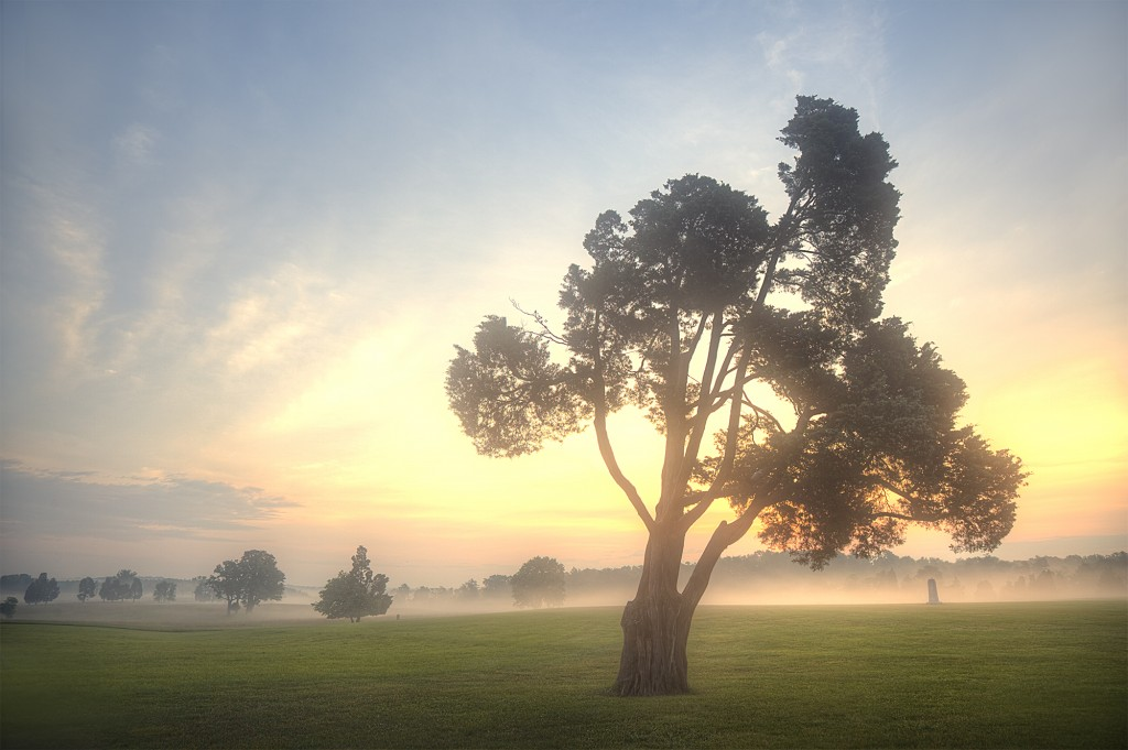 manassas, sunrise, tree, battlefield, va, virginia, national park, national battlefield, tree, clouds, fog, sunrise