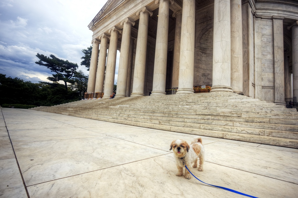 frankenstein, frankie, woopan, jefferson memorial, storm, clouds, rain, shih tzu, puppy, dog, washington dc