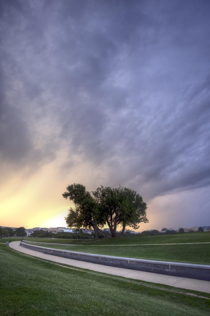 tree, storm, dc, washington, path, capitol, rain, sun, weather