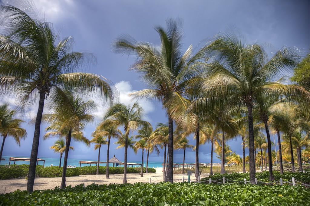 turks and caicos, palm trees, beach, storm, movement, wind, weather, island, caribbean, trees, beach, ocean, sand