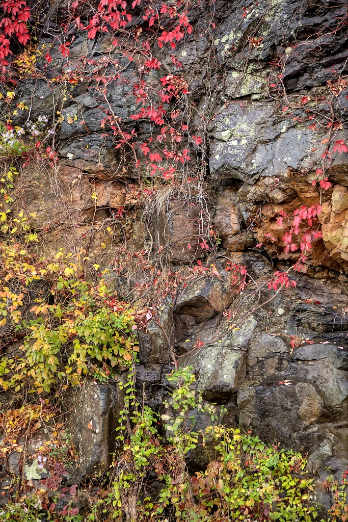 leaves, fall, autumn, changing colors, rock, landscape, virginia, va, travel,