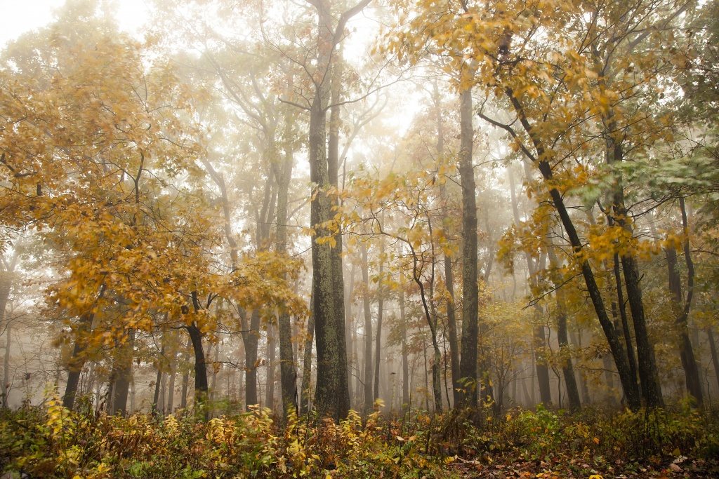 shenandoah national park, colors, trees, autumn, fall, change, colors, front royal, virginia, va, drives, skyline drive, travel, tour, trees,