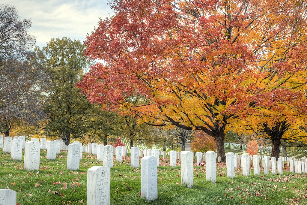 arlington, va, virginia, graves, tombstones, trees, color, autumn, fall, sun, landscape, pattern, va, virginia,