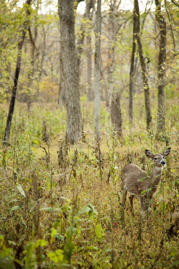 deer, great falls, park, virginia, bambi, trees, wildlife, va,
